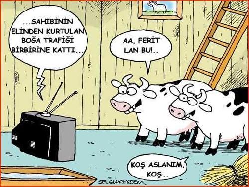 kurban_bayram_
